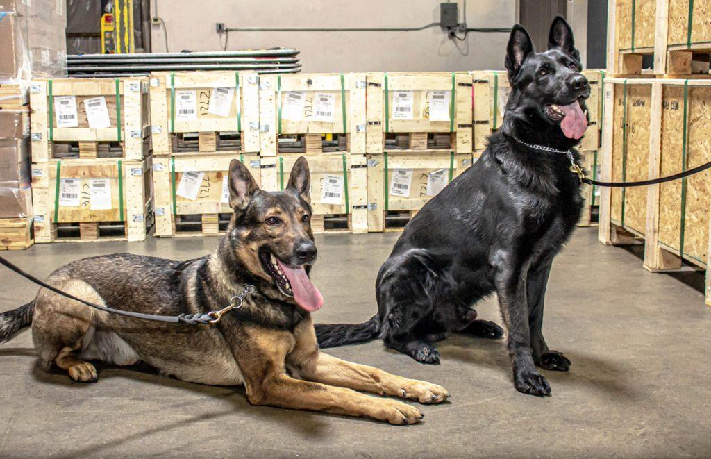 CFS   Air Cargo Screening Dogs