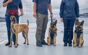 K9 Cargo Screening Teams - Commercial Freight Services