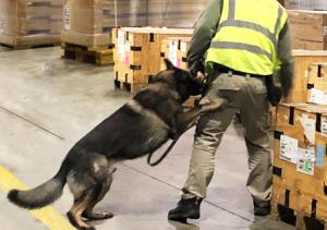 CFS | K9 team screening cargo