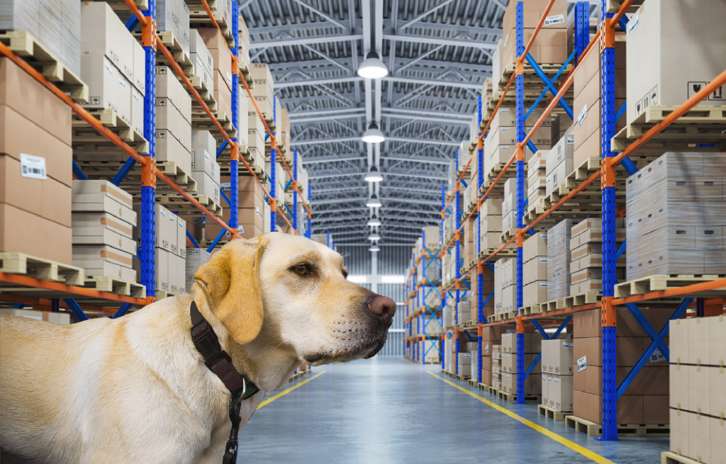Commercial freight Services | K9 Air Cargo Screening Dog