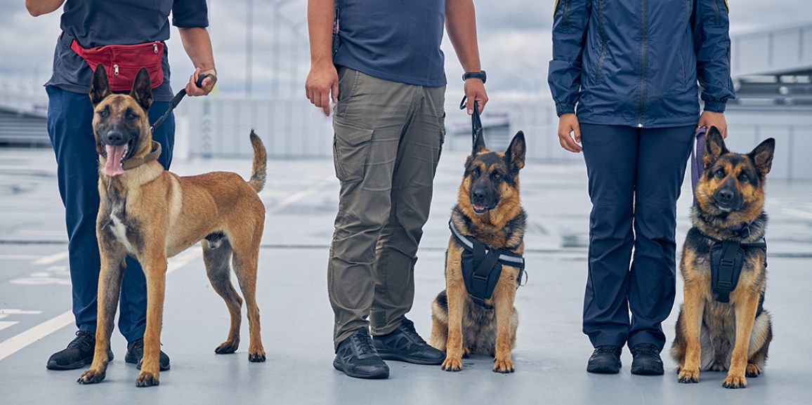 Canine Teams in Air Cargo Screening