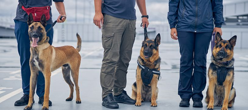 Canine Teams in Air Cargo Screening