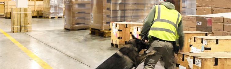 Commercial Freight Services Certified for TSA Third-Party Canine Cargo Screening